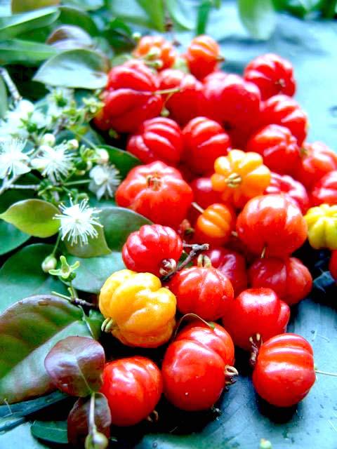 surinam cherry a.jpg