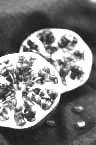 pomegranate 3.jpg