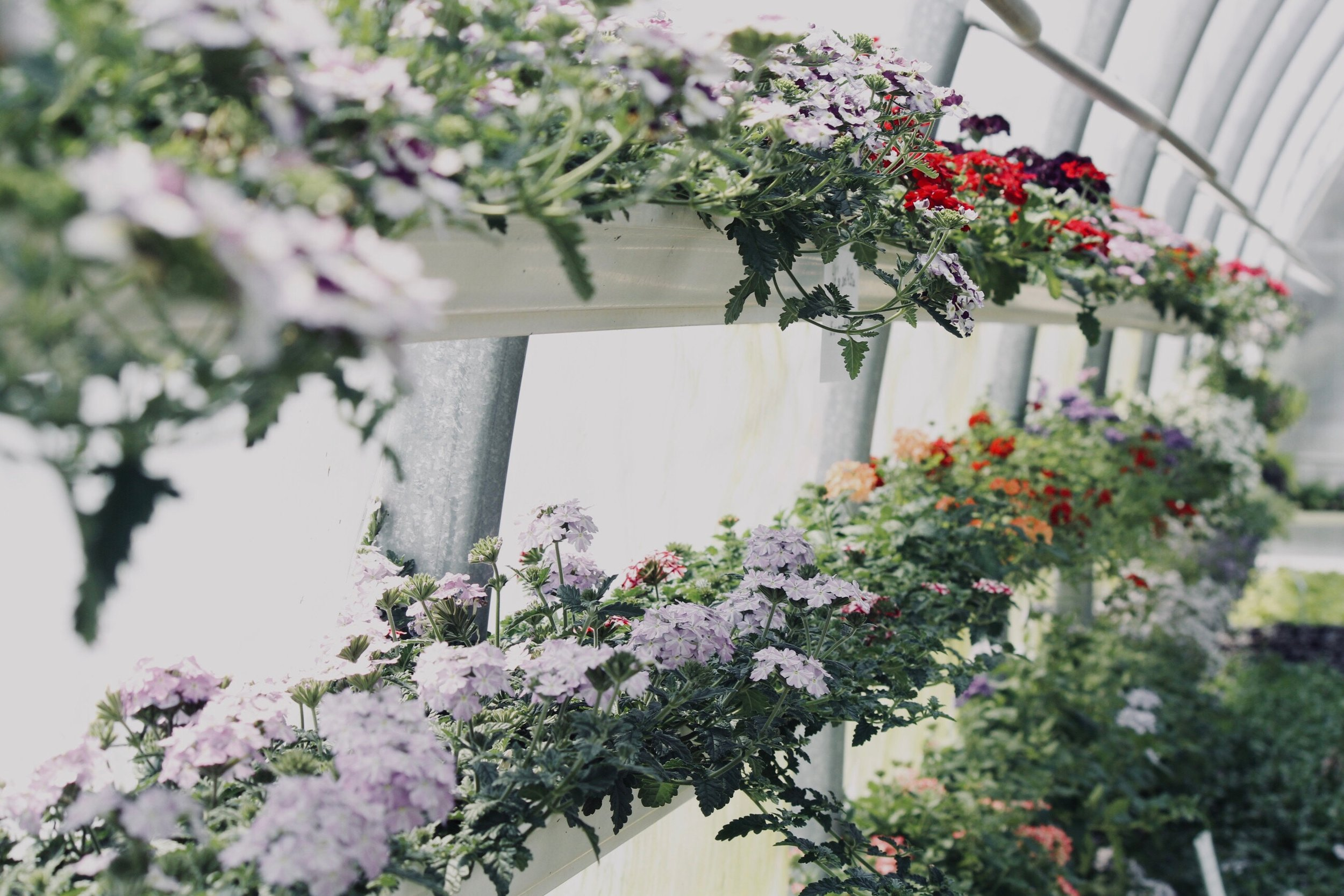 Indoor Garden. Photo by Sydney Rae courtesy of Unsplash.