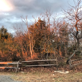 The sunset casts light on a trail gate at Jamaica Bay Wildlife Refuge as seen from Ranger Audrey Bartow's office window. Photo courtesy of Audrey Bartow.