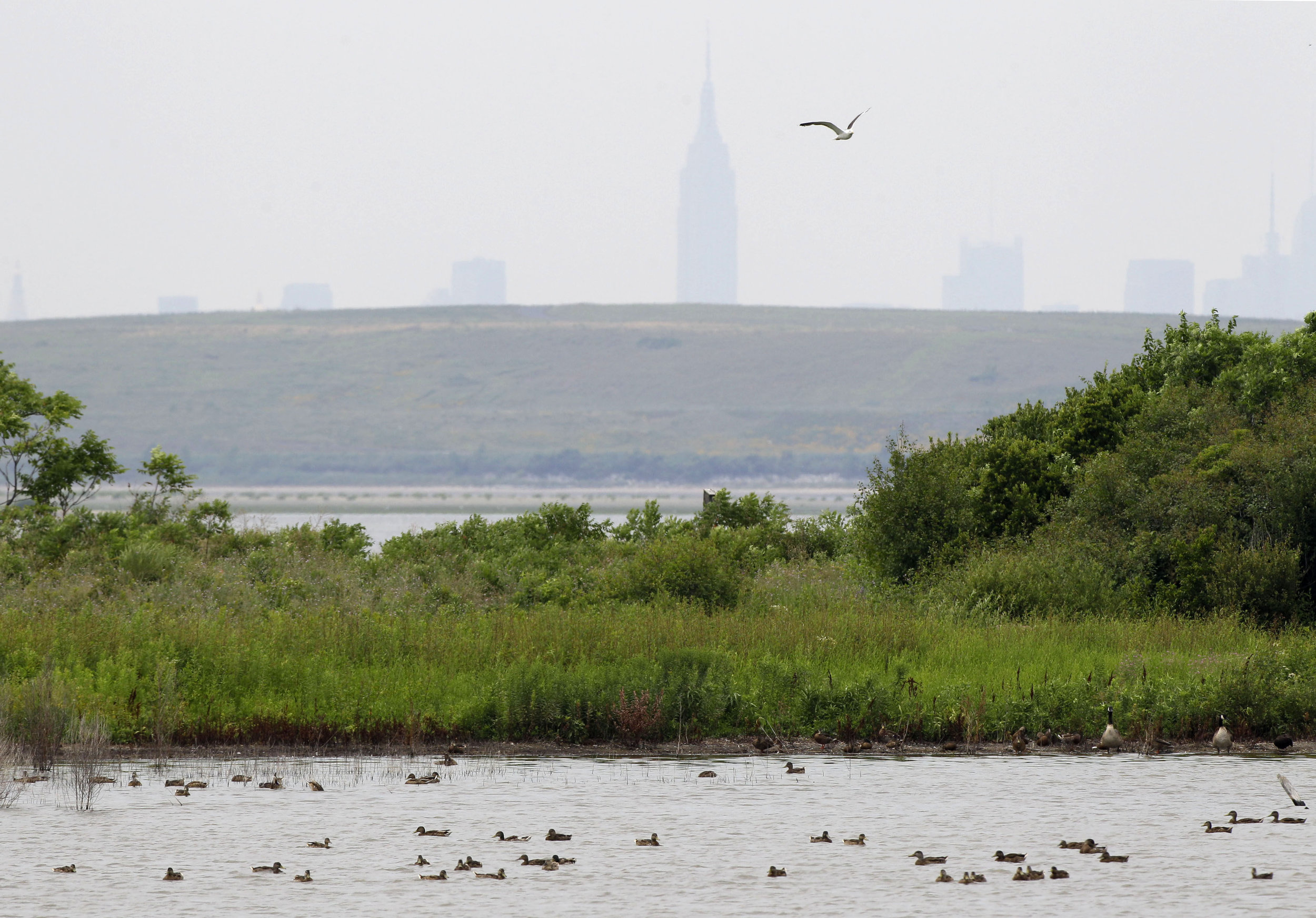 The West Pond at the Jamaica Bay Wildlife Refuge, part of the National Park Service. AP photo.