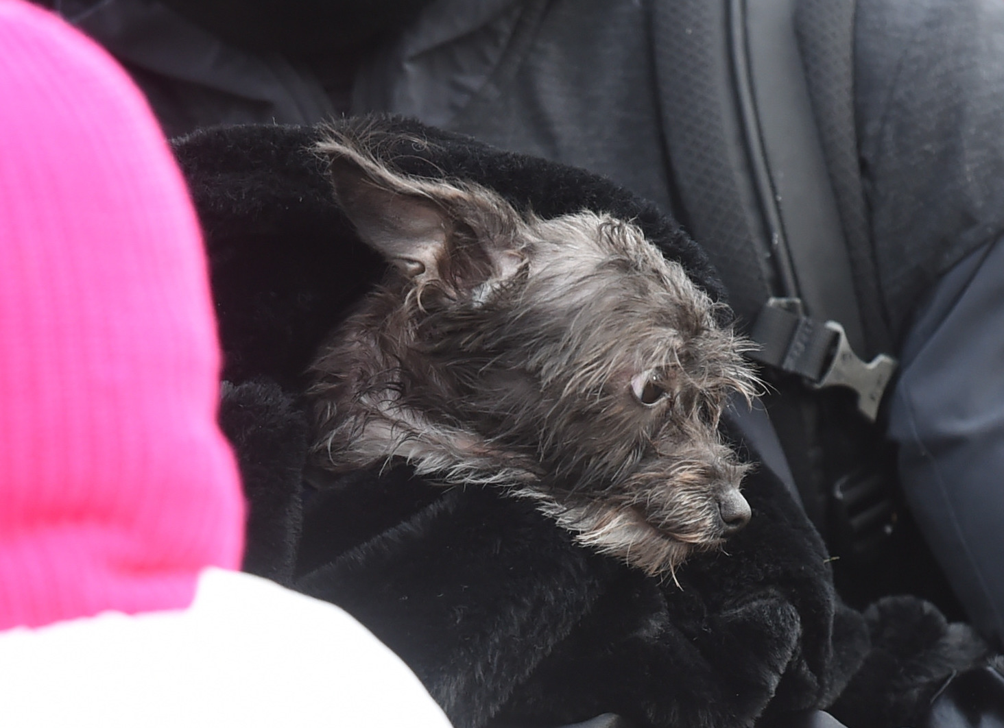 The FDNY rescued Celine, a dog who was cowering inside the bathroom of the home.