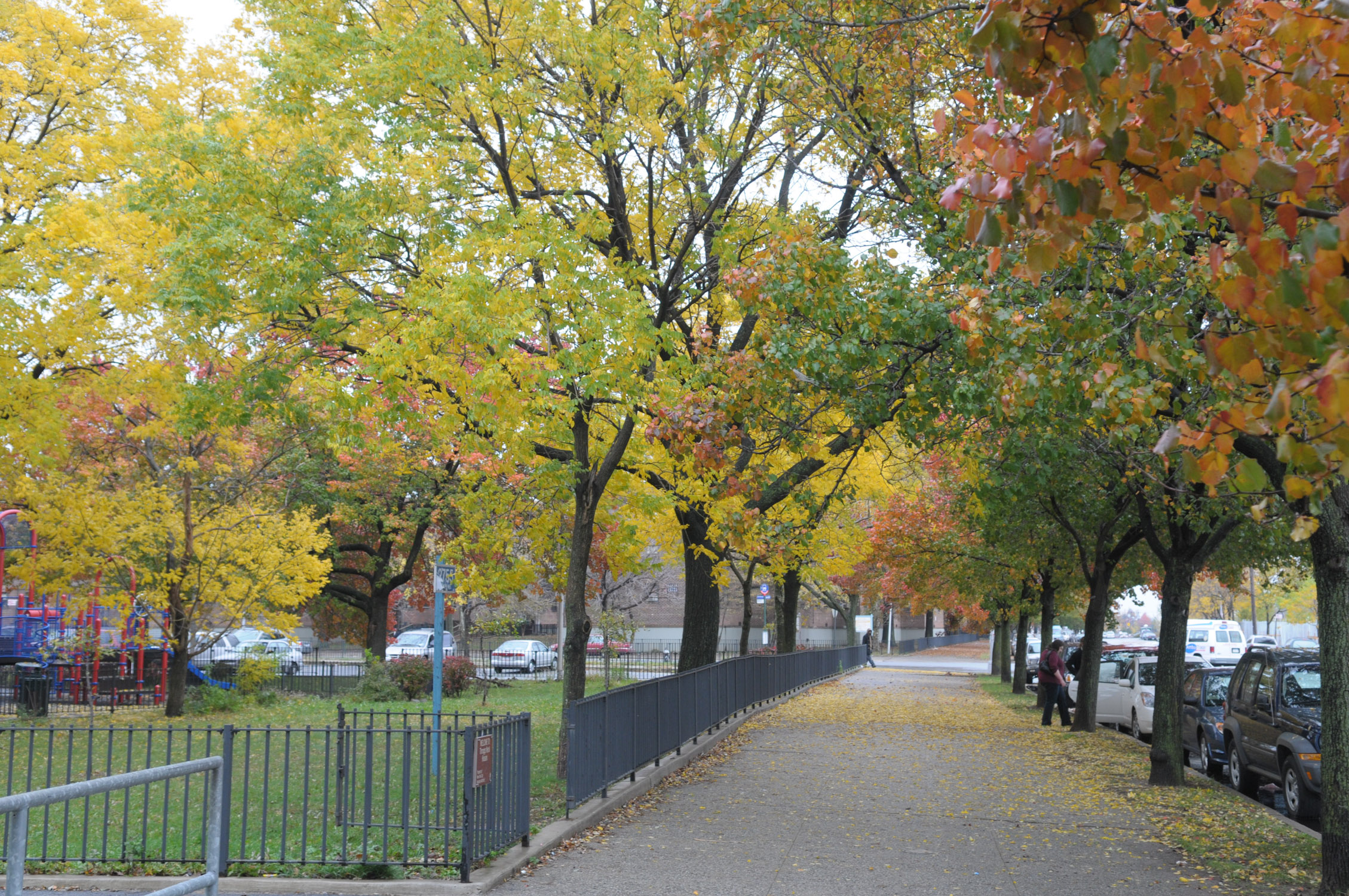 A tree-lined street in Queens.  Photos courtesy of the Parks Department.