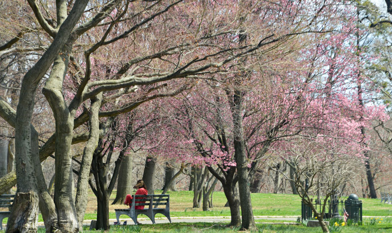 Spring blooms at Kissena Park. Photo via the NYC Parks Department.