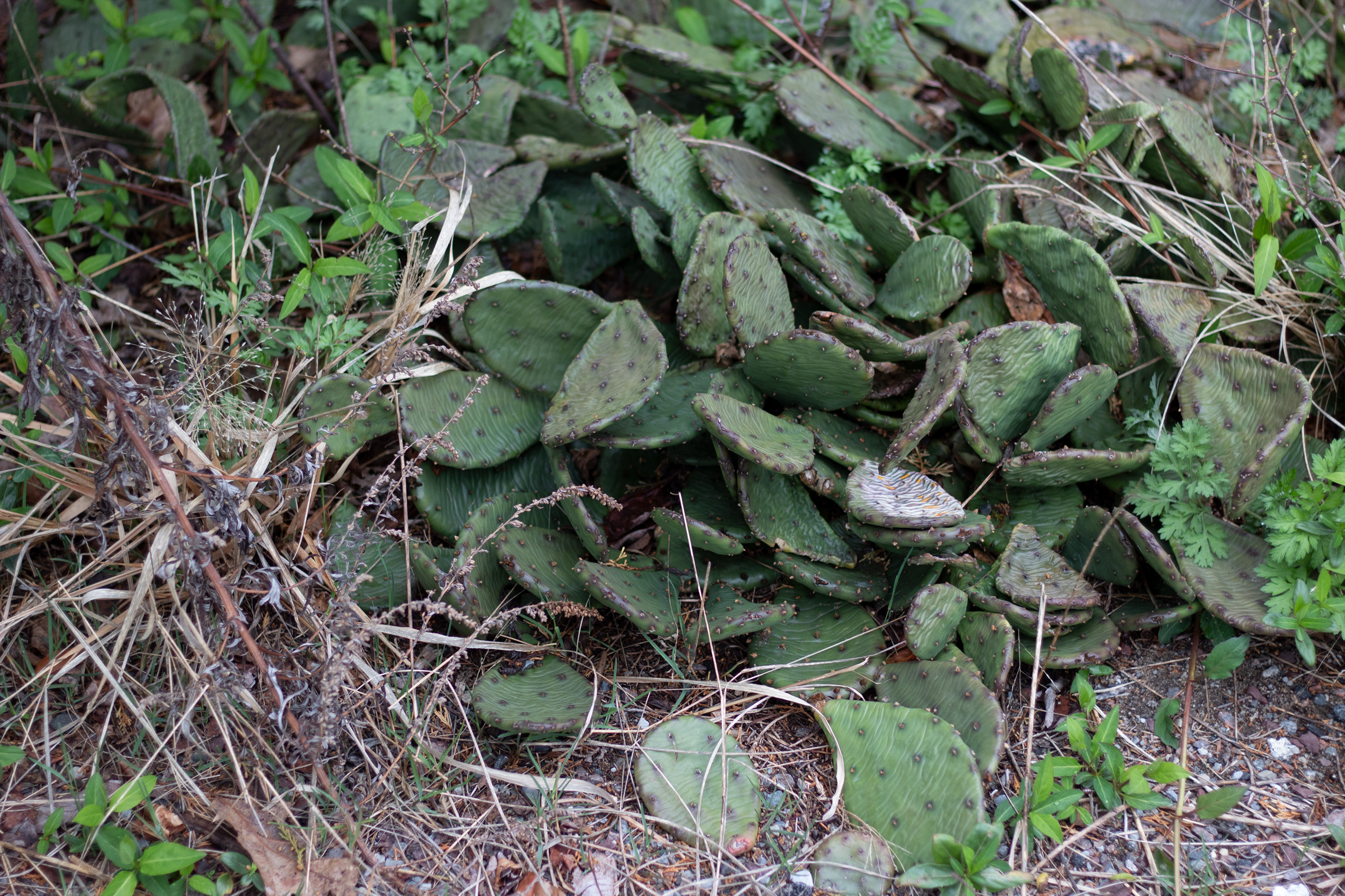 Watch your step — cacti abound.