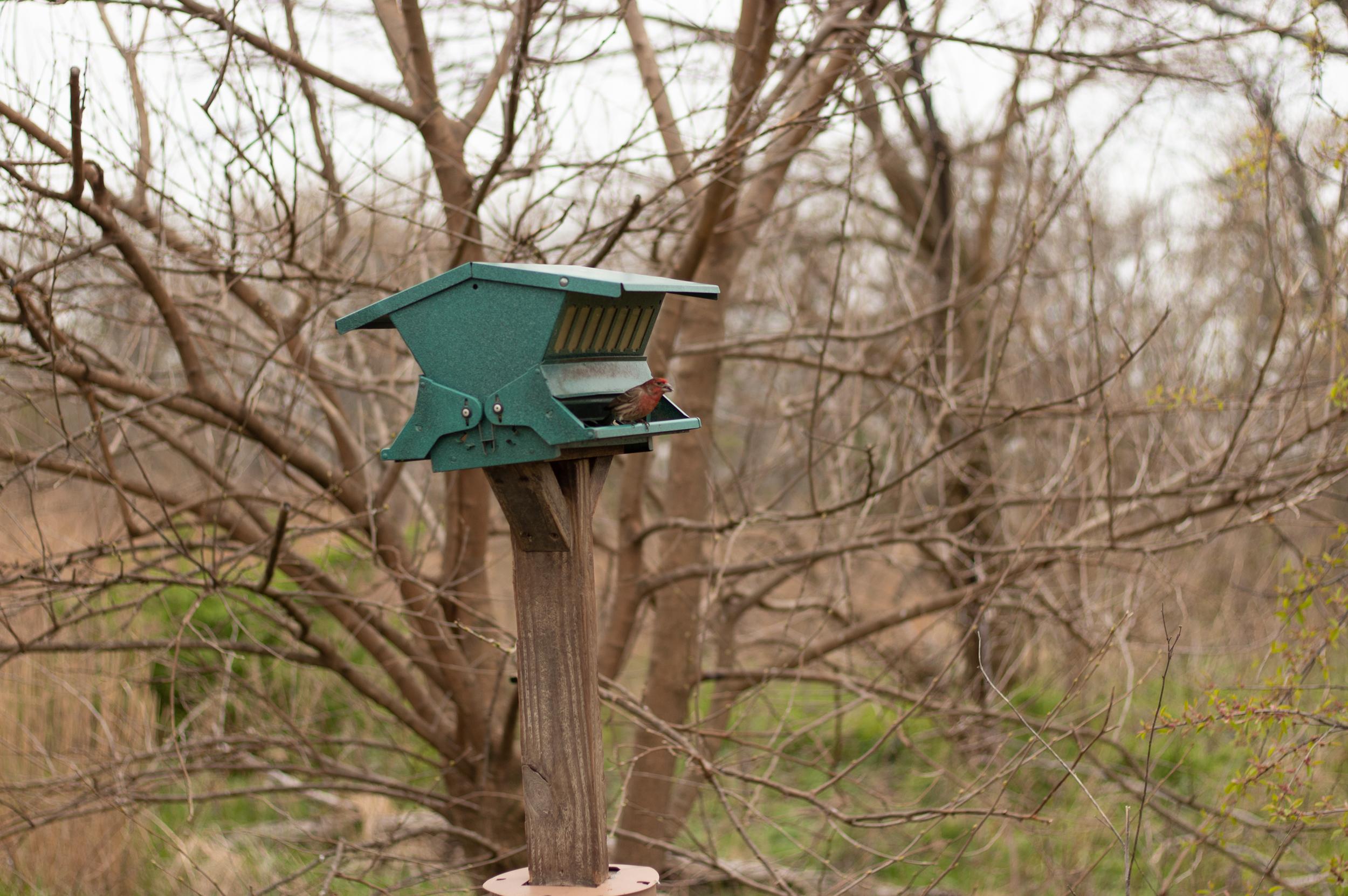 A bird visits a feeder.