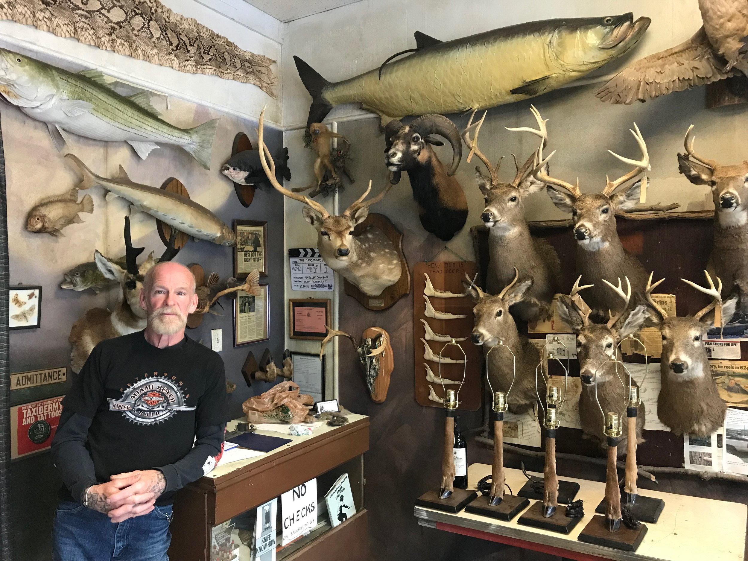 Taxidermist John Youngaitis stands before a wall of stuffed creatures at his Middle Village shop.  Eagle  photos by David Brand