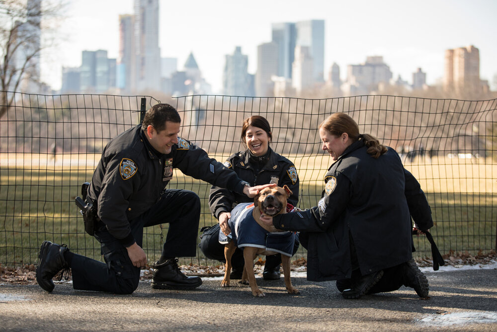 NYPD police officer John Riquelme (left) was arrested after allegedly crashing his car into another car in Jackson Heights Friday morning and fleeing the scene. He was celebrated by animal lovers last year for helping to get a rescue dog adopted. Photo via the ASPCA.