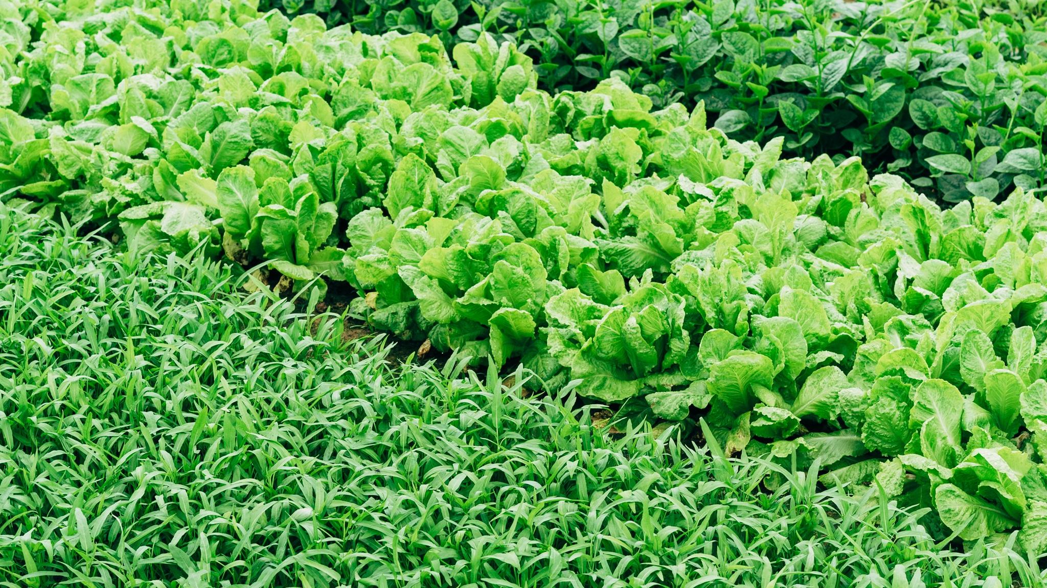 edible green spaces -