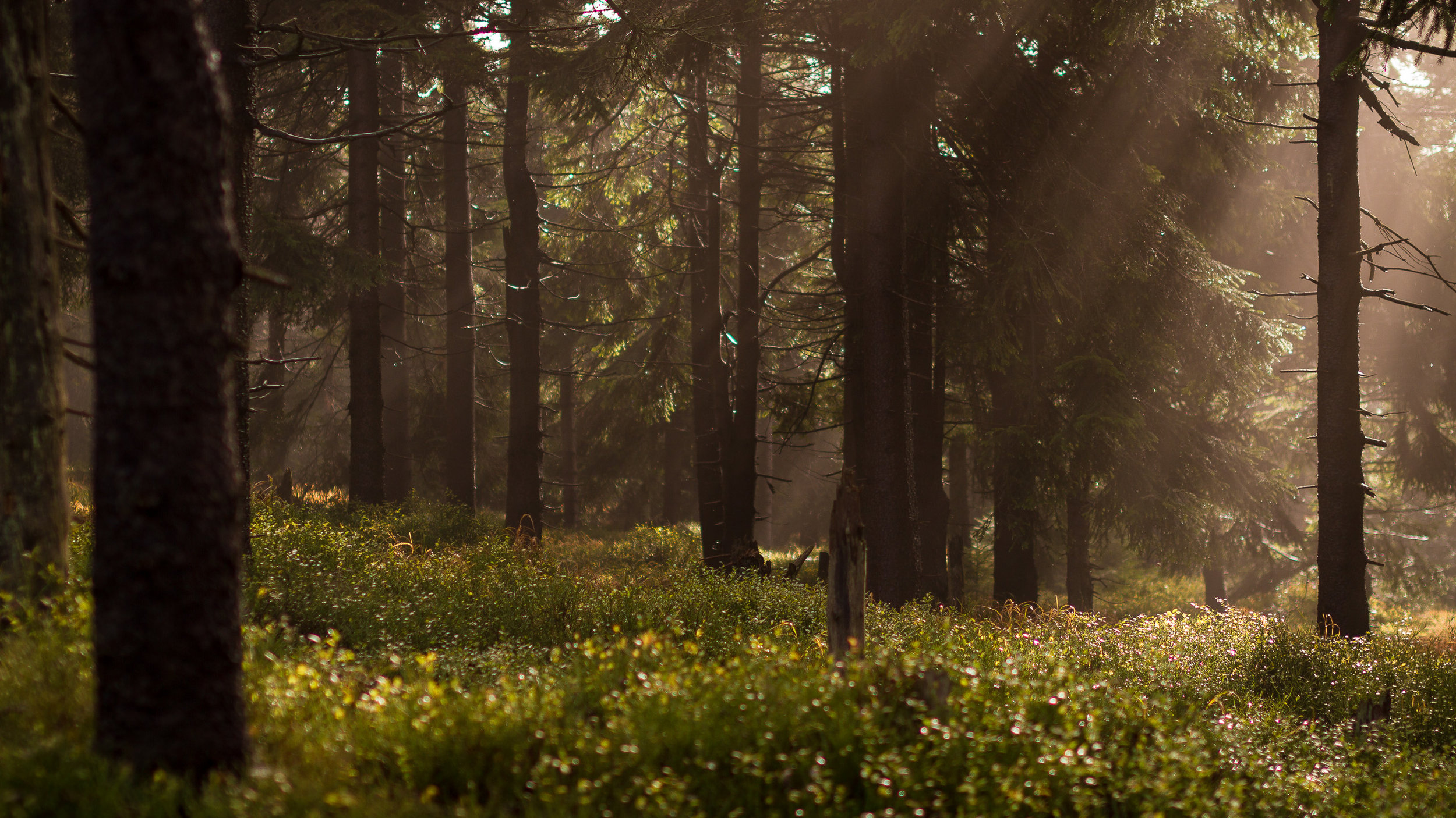 our ultimate vision is to re-forest the planet -