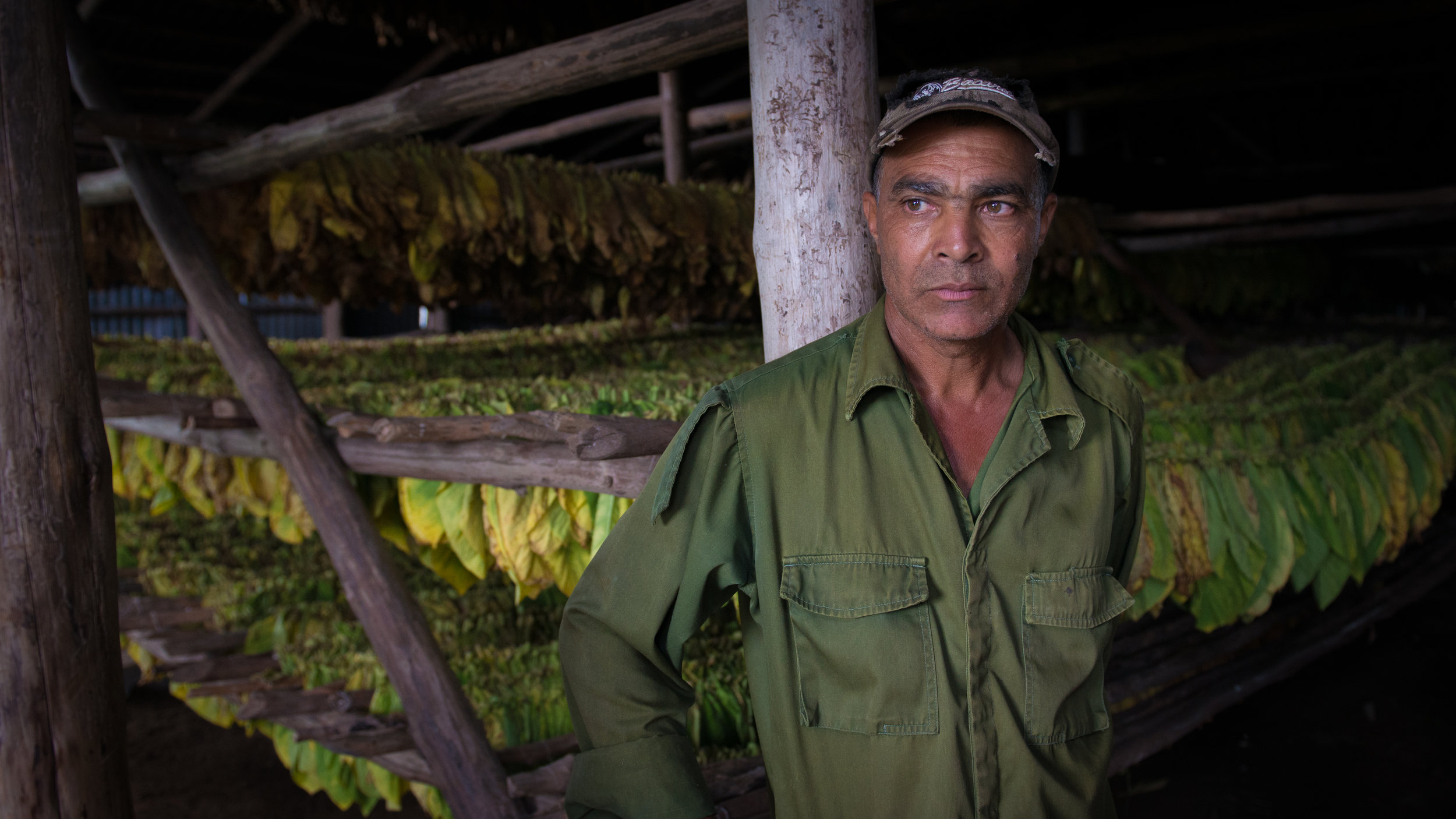 Tobacco Farmer, Viñales, Cuba