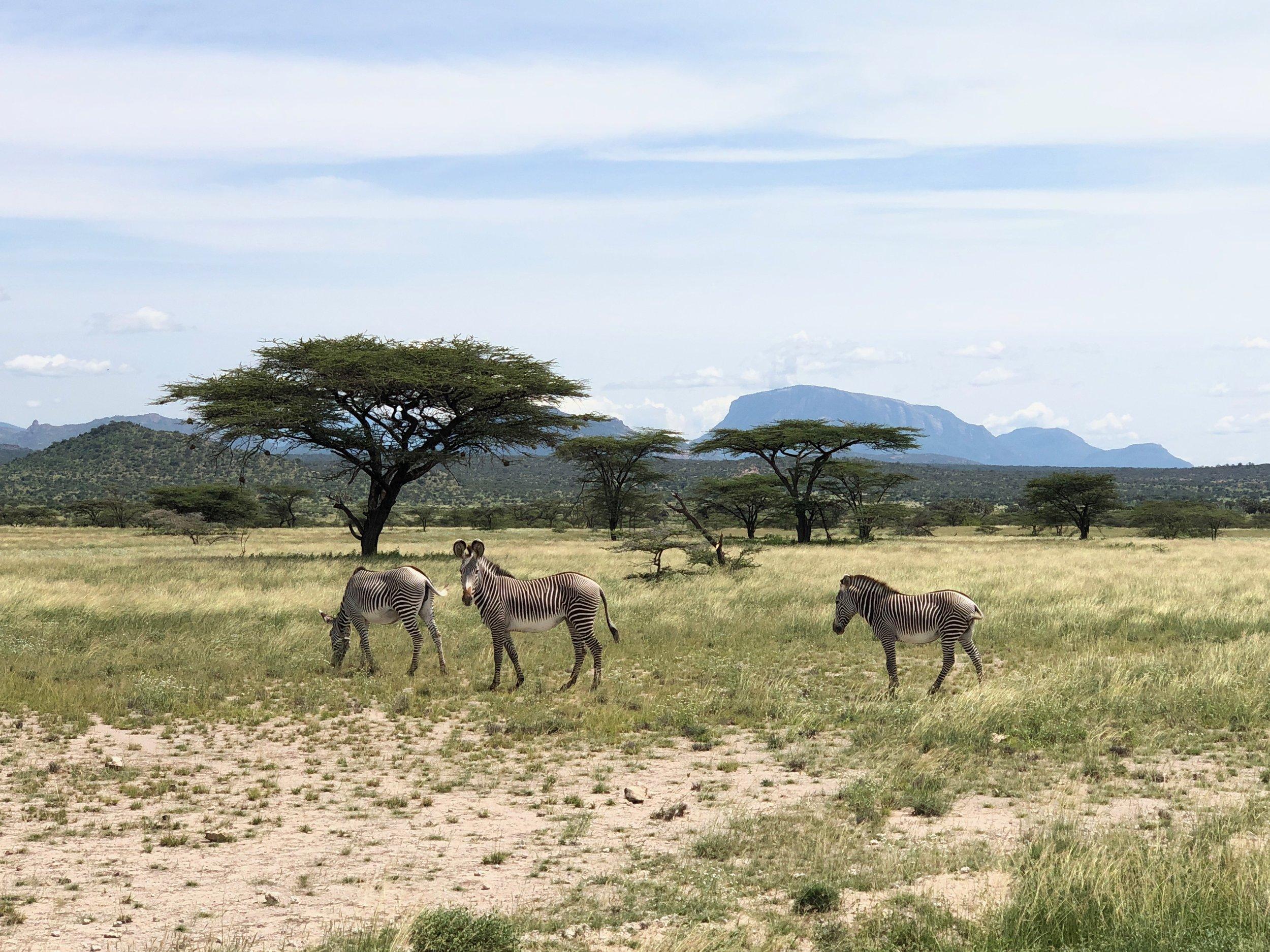 A photo by team member Linnea Engstrom on the teams impromptu safari! A highlight of the trip.
