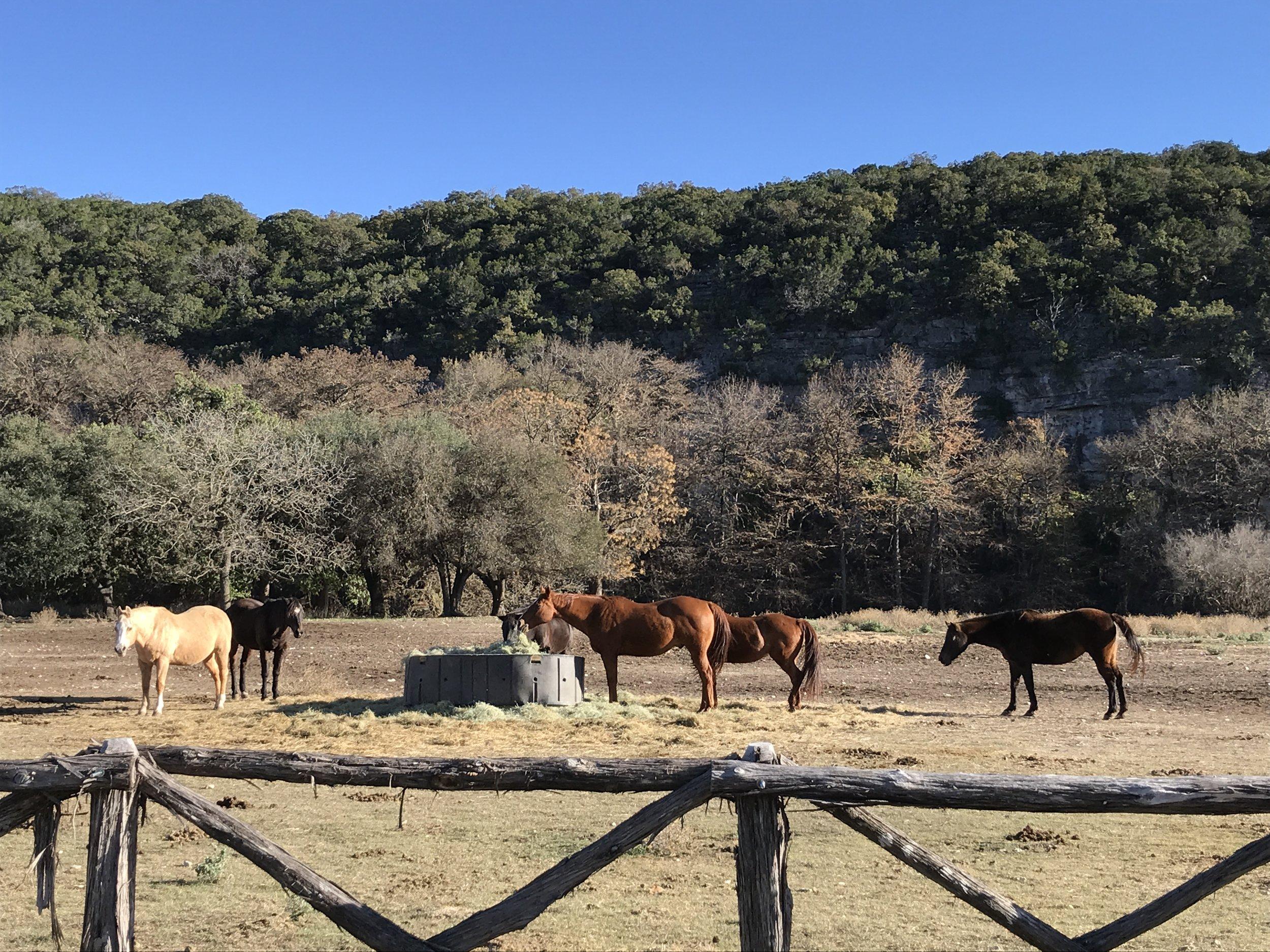 Horses outside of Hunt.
