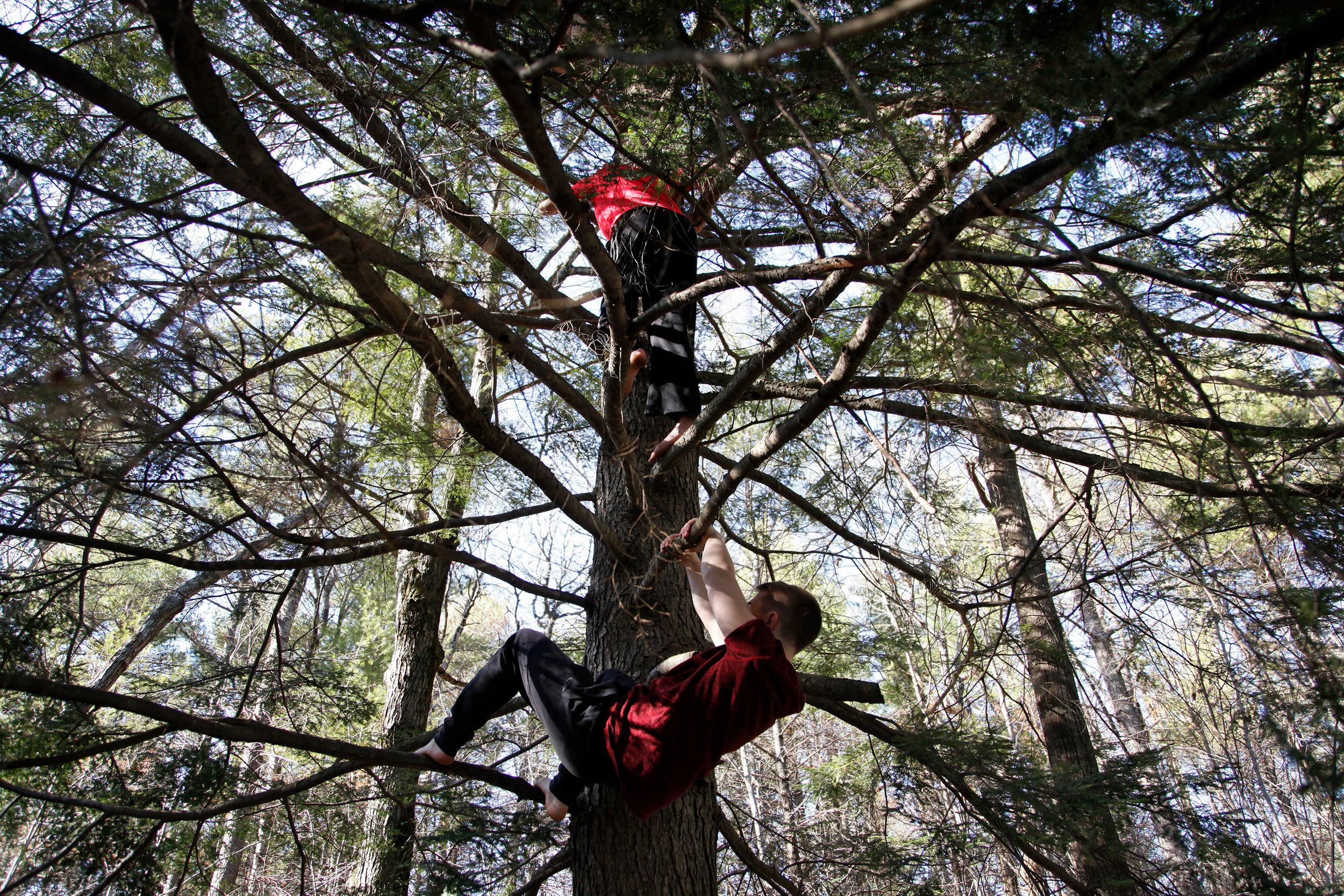 Tree climbing, 2016
