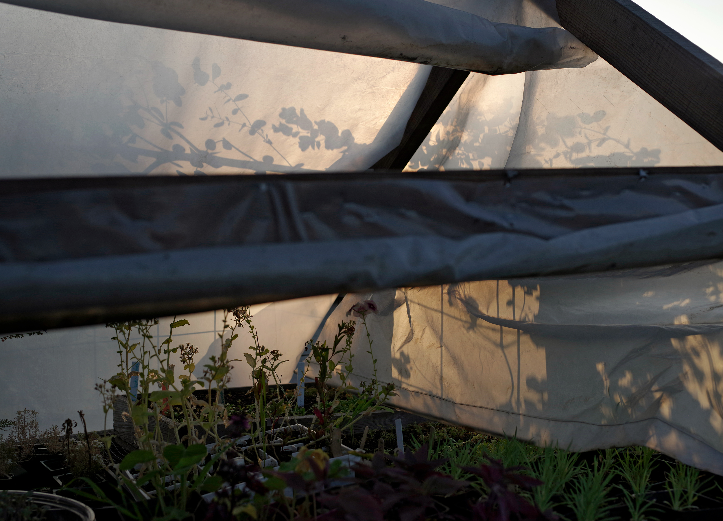 Greenhouse, West Oakland Woods Farm, 2017