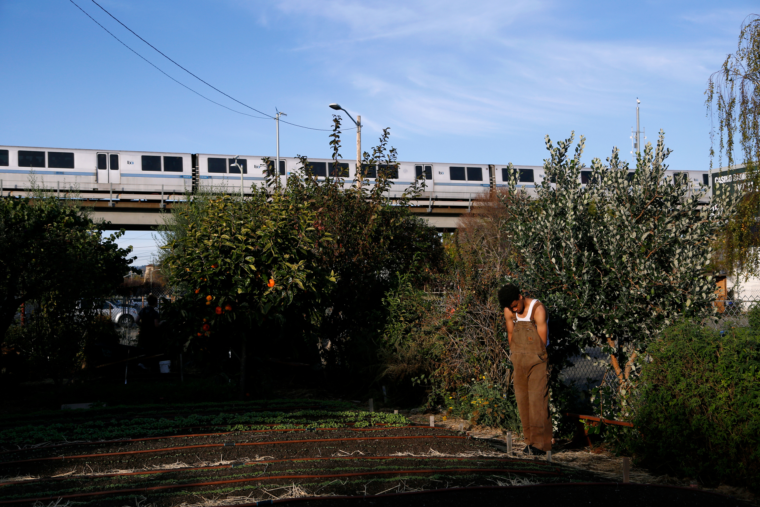 Ketwan with train, West Oakland Woods Farm, 2016