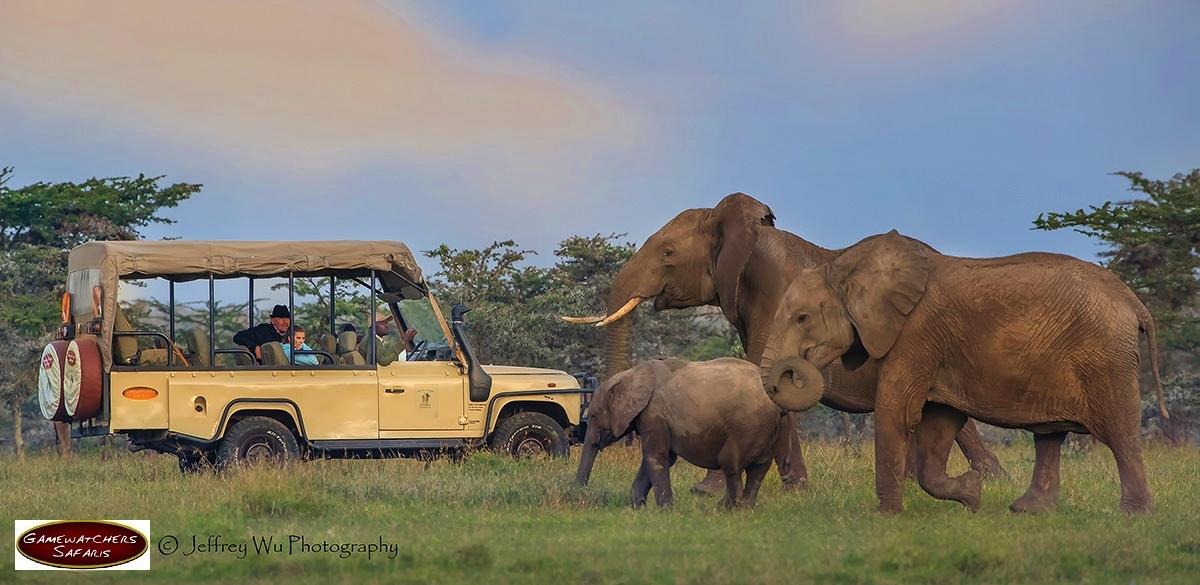 Safari Tour in Africa
