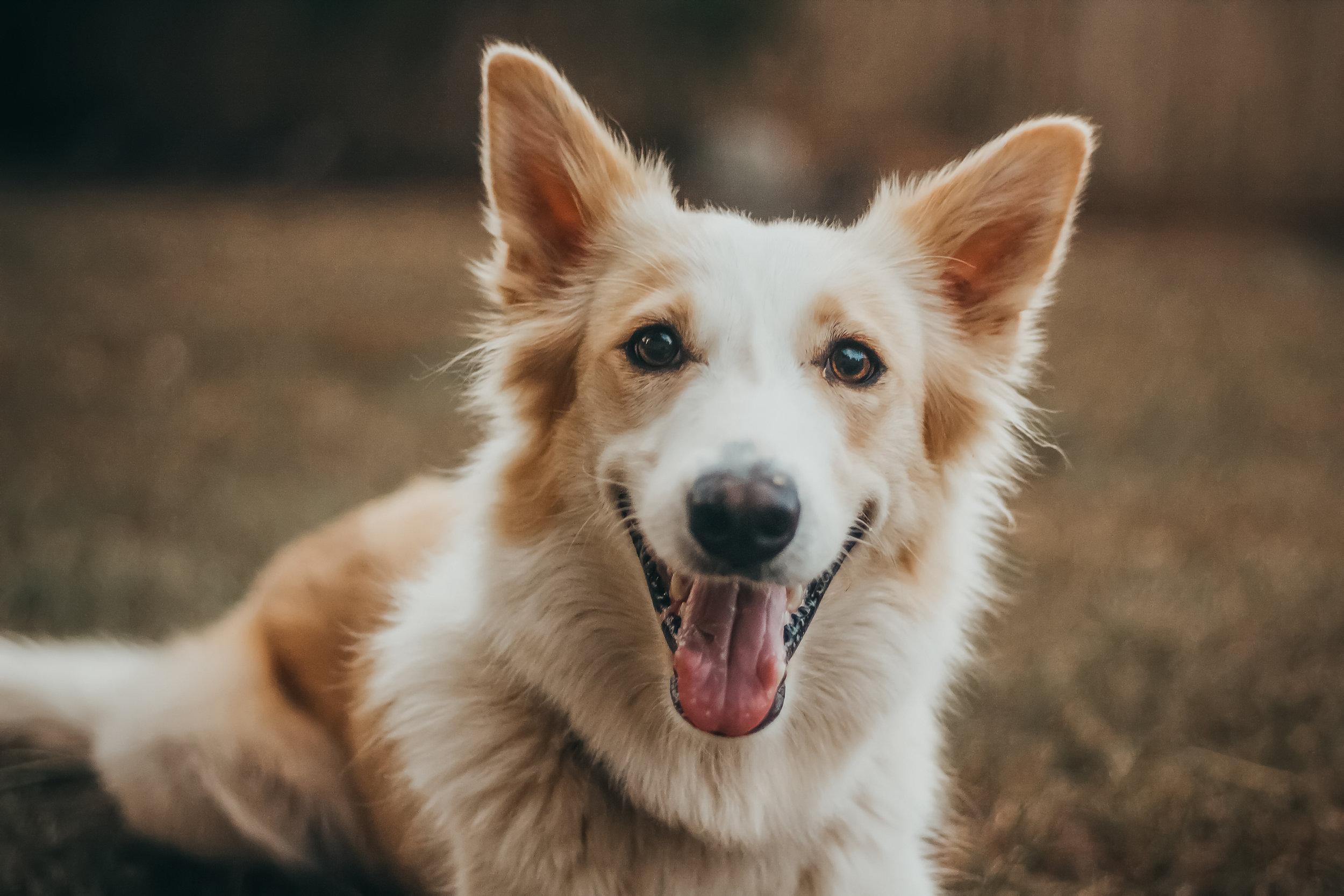 My dog Willow, Jan 31st 2019.