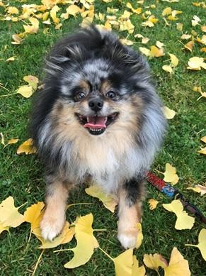 Aiko Dog - Compassionate Euthanasia Services Put to Sleep.jpg