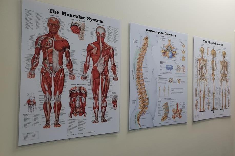 Condtions we treat Chiropractor Physiotherapy Massage Personal training howick botany pakuranga.jpg