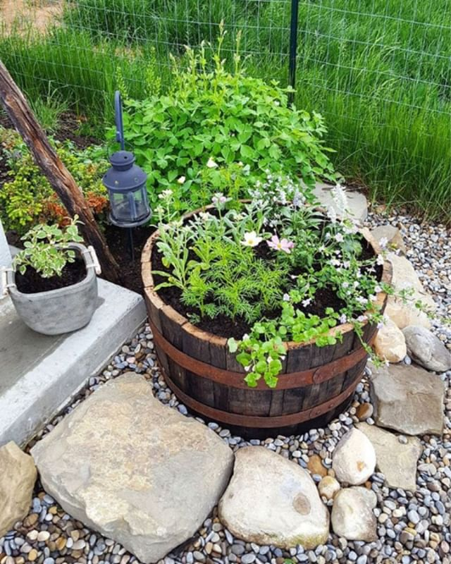 BARREL PLANTERS :: perfect for keeping your herbs together as well as being a home to all your favourite flowers... what would you plant? Flowers or herbs?  #winebarrels #onlymarlborough #lovemarlborough #blenhiembusiness #blenhiemnz #brillianteveryday