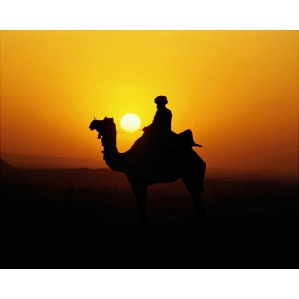 camel_bedouin_sunset.jpg