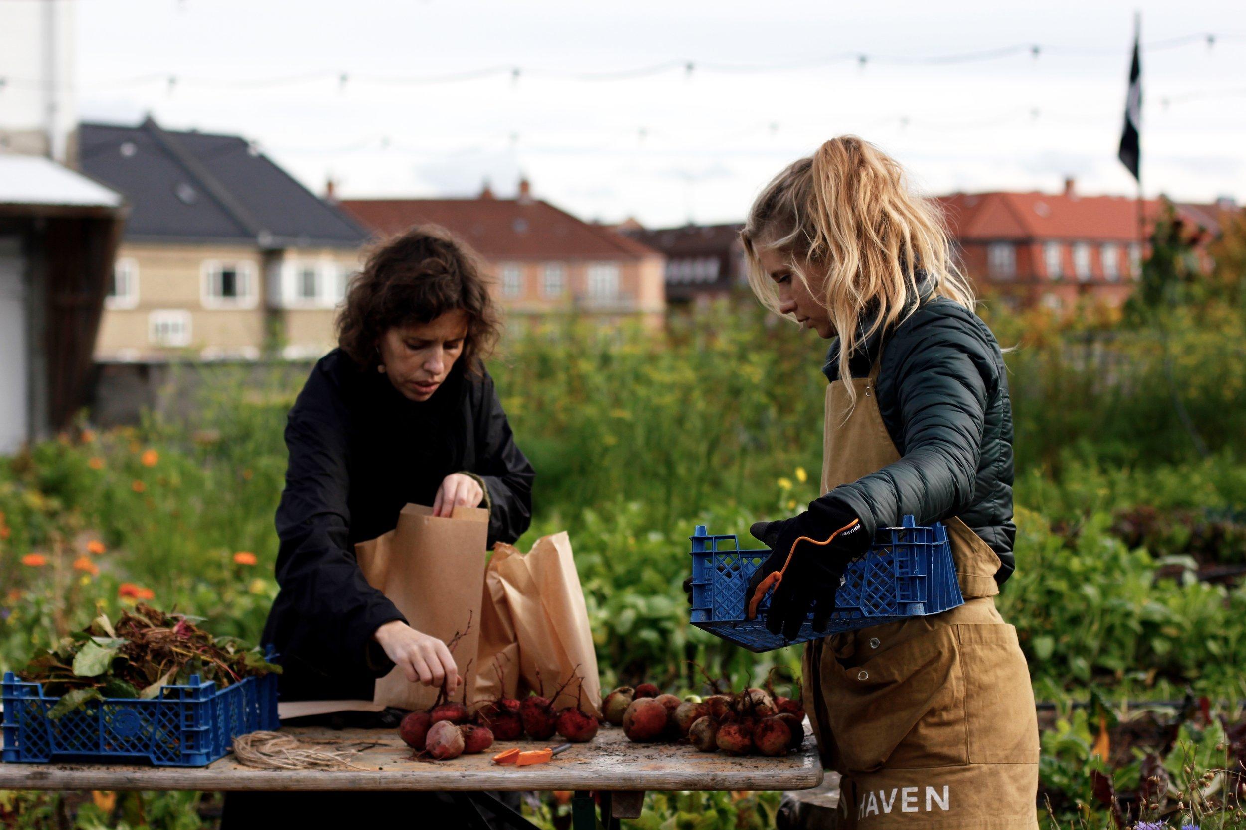 pakning af grøntsager, efterår.jpg
