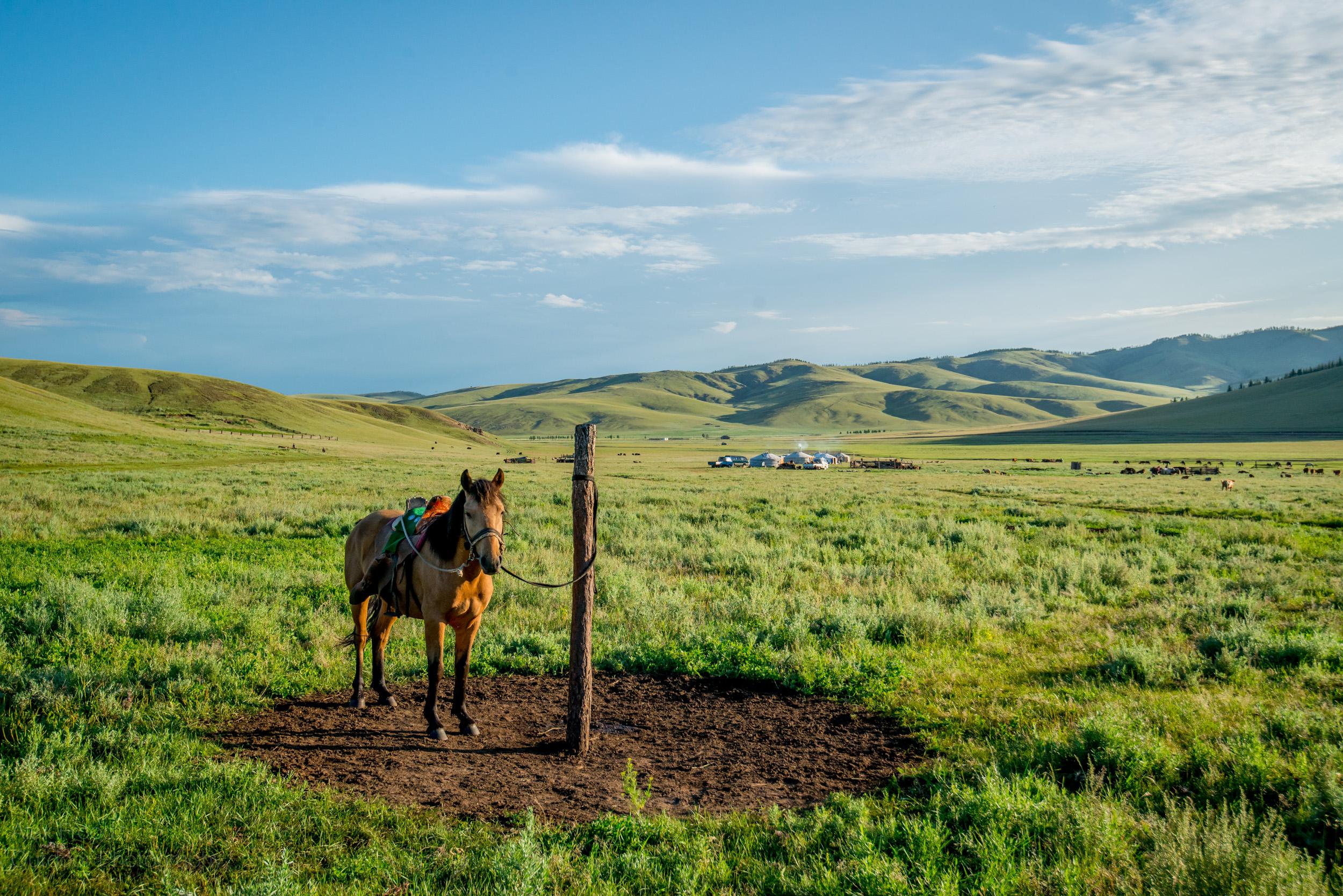 Mongolia-9.jpg