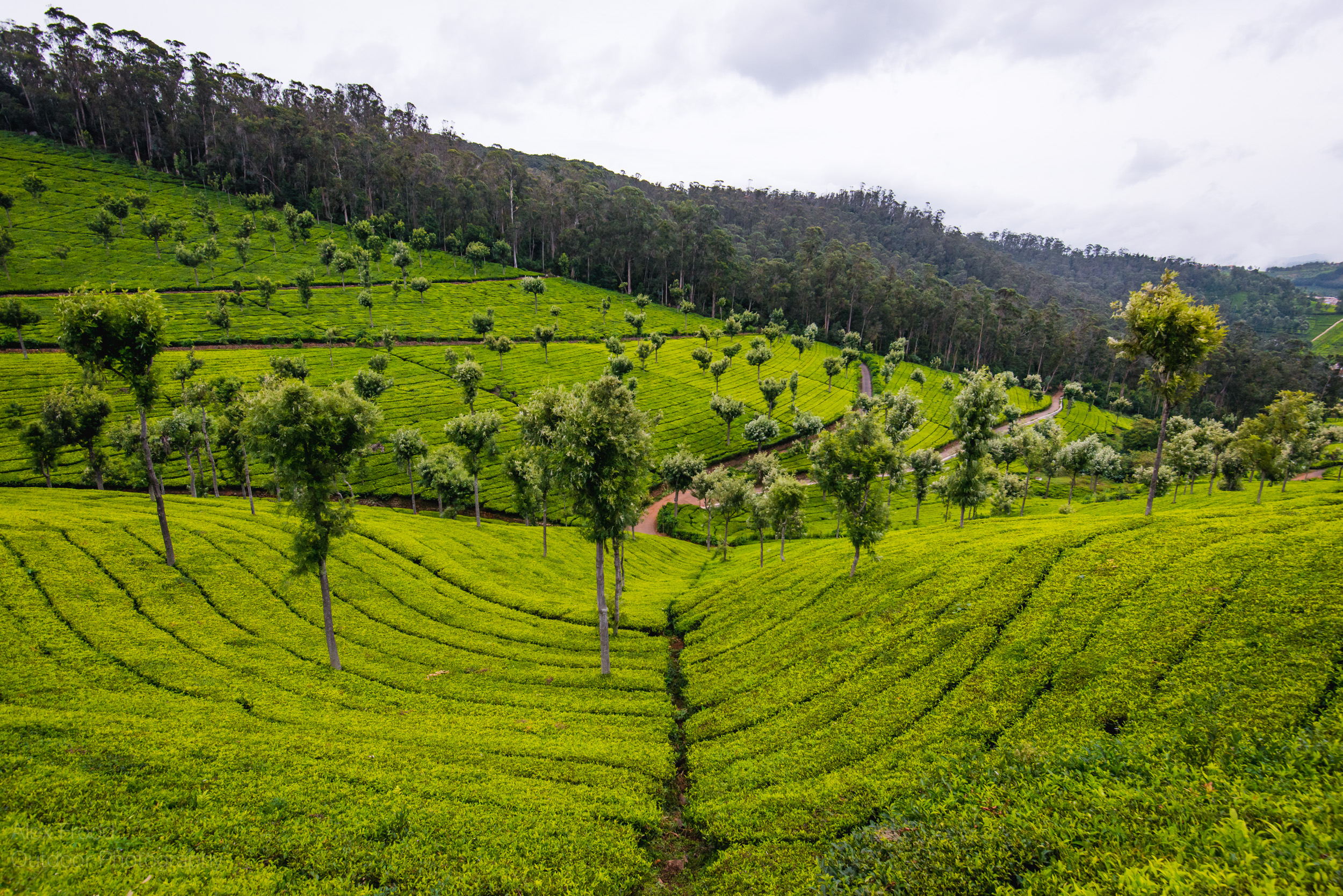 India South-5.jpg
