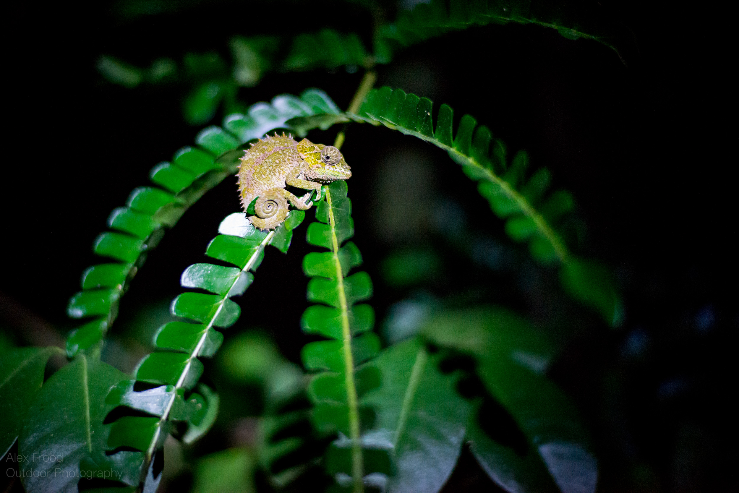 Madagascar-44.jpg