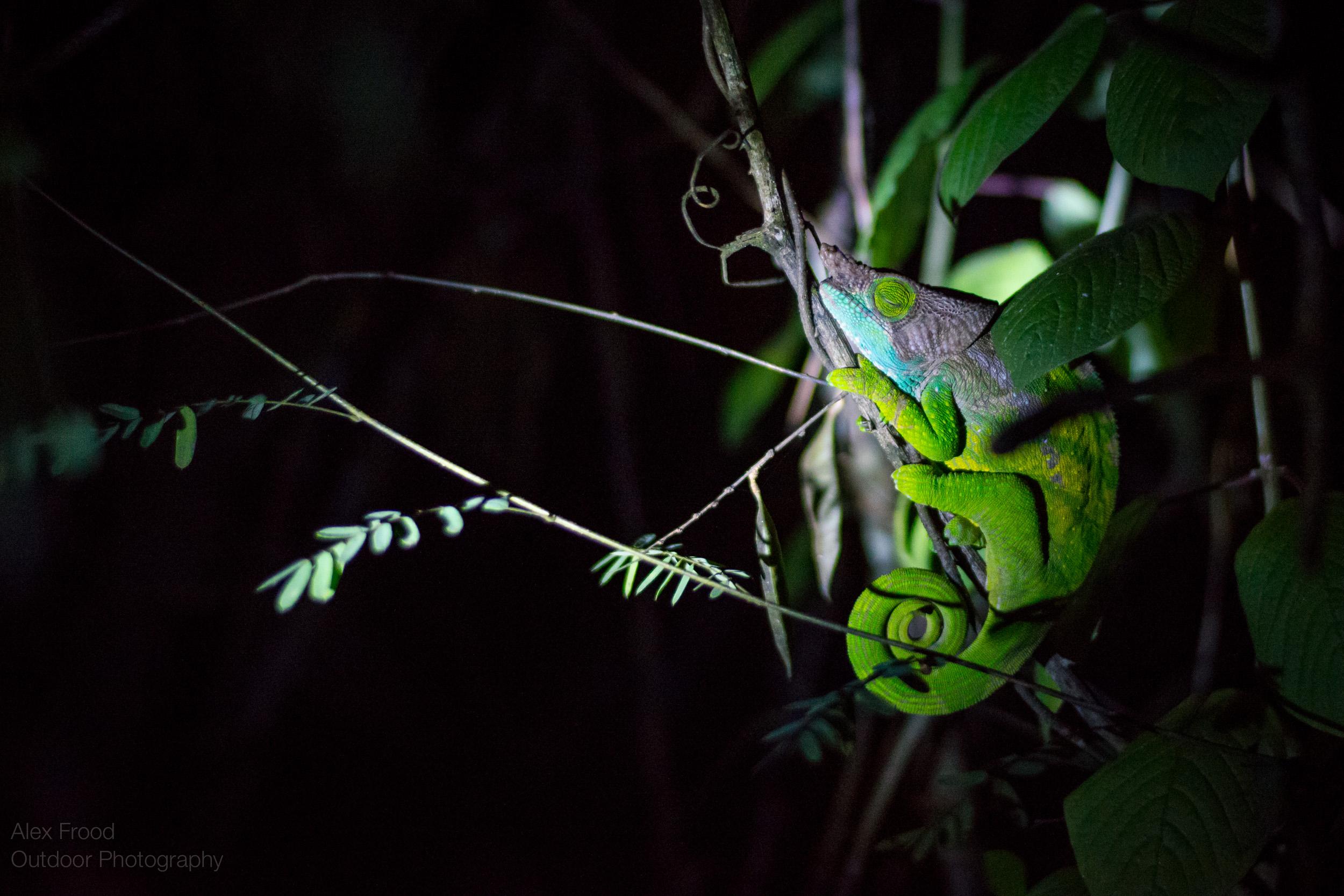 Madagascar-43.jpg