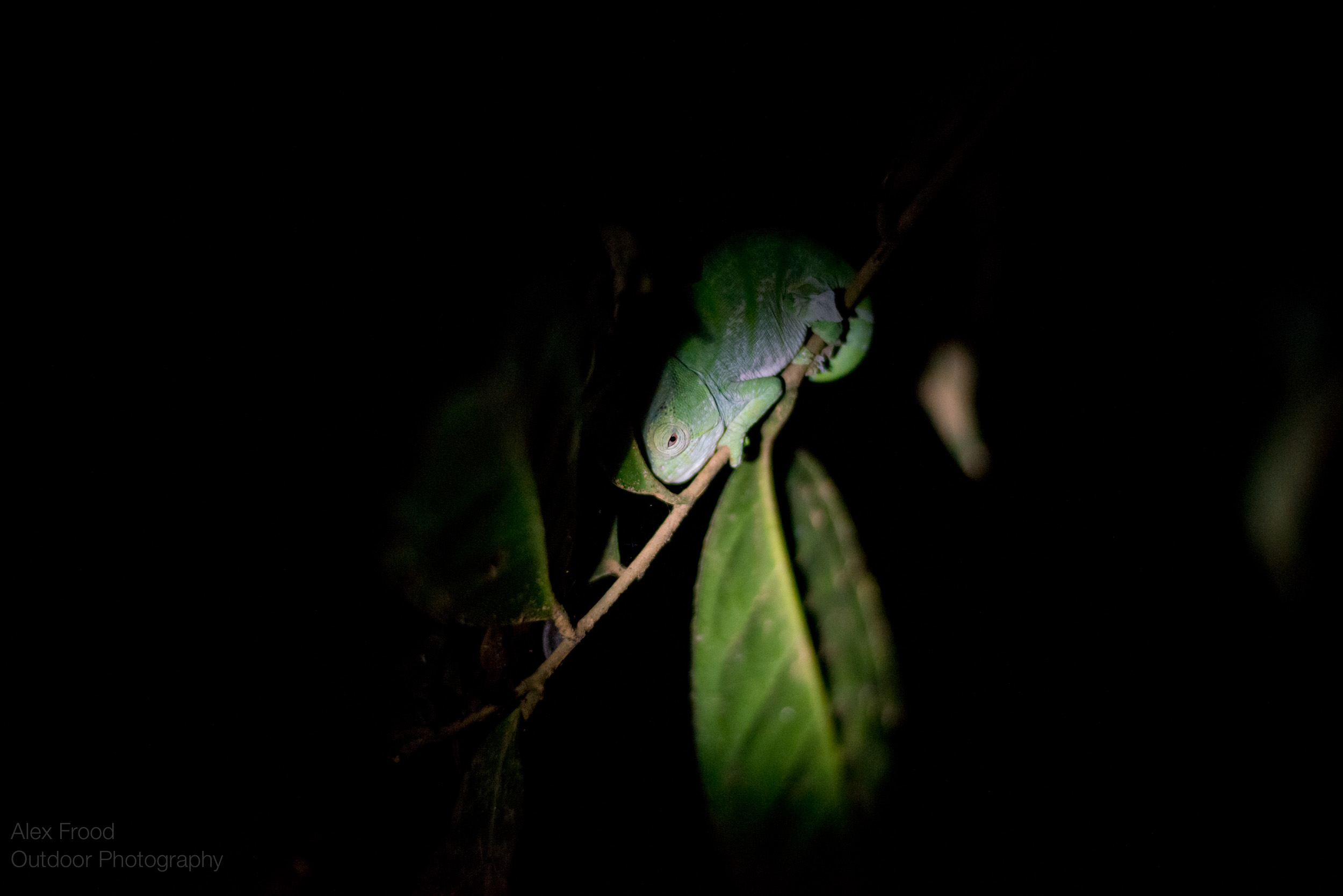 Madagascar-45.jpg
