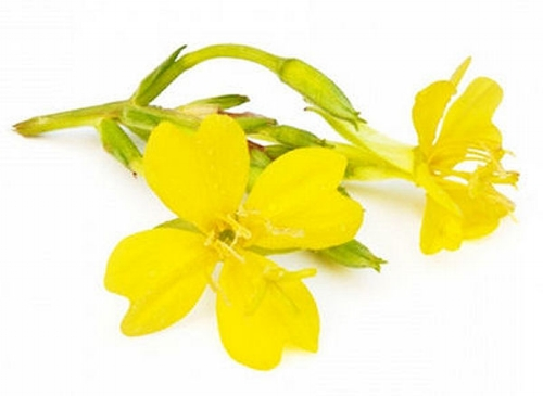 product_evening_primrose_oil.jpg