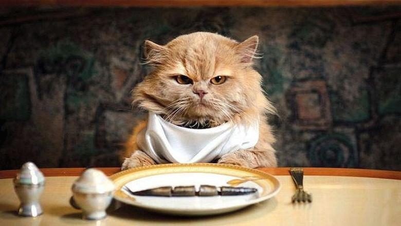 wallpaper-cat-eat-fish.jpg
