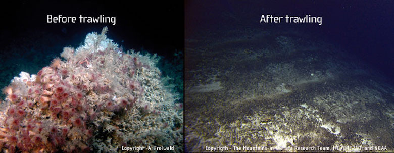 bottom trawling before and after