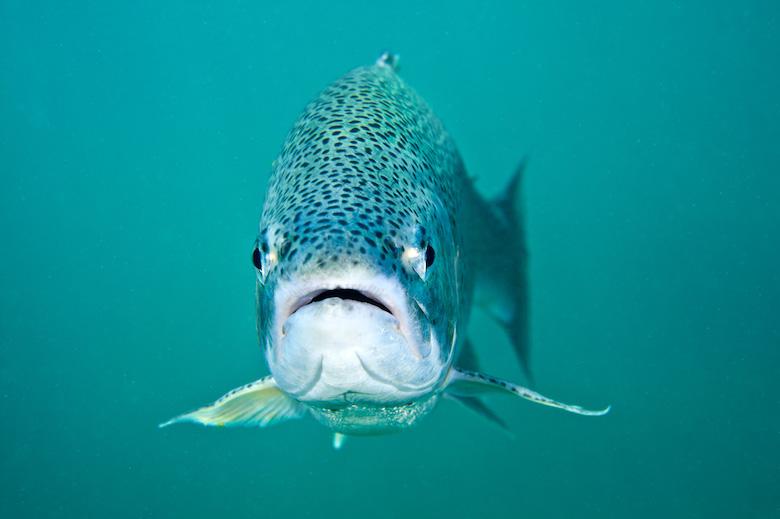 trout-fish-feel.jpg