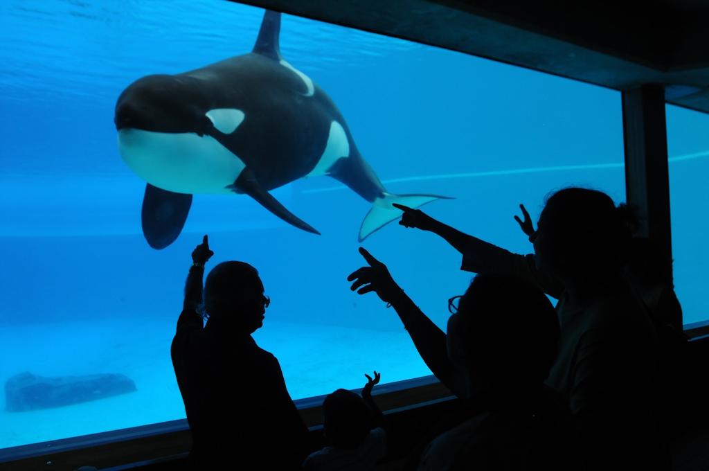 orcas in captivity Joanne McArthur