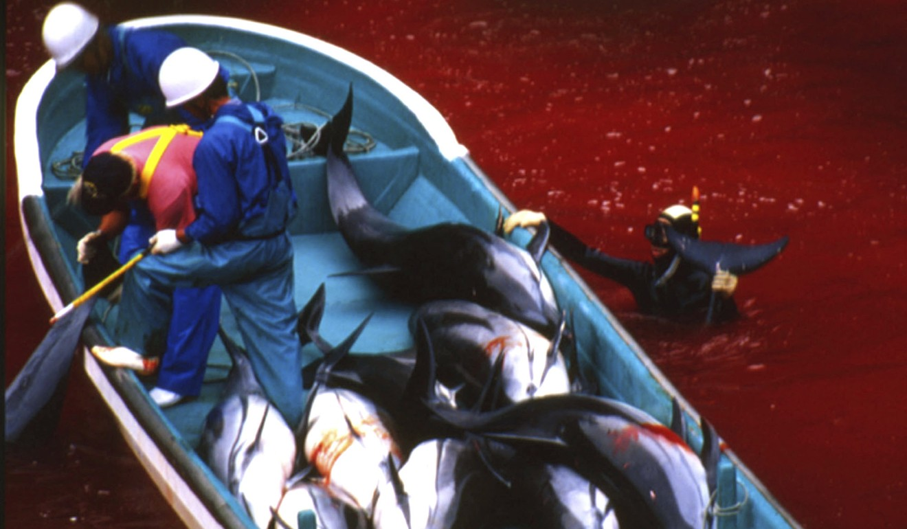 unseen cost of Dolphin entertainment -slaughter of thousands in Japan