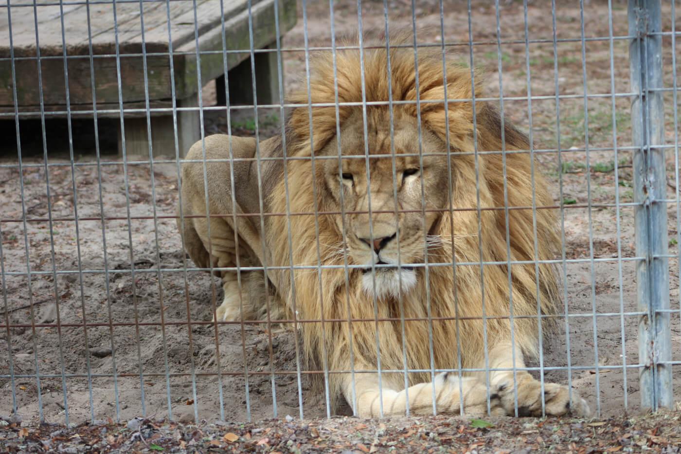 zoos cruelty