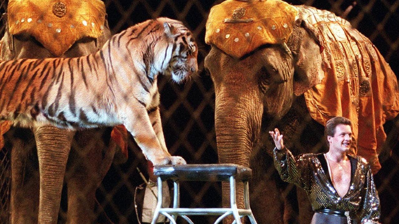 wild animals in circus