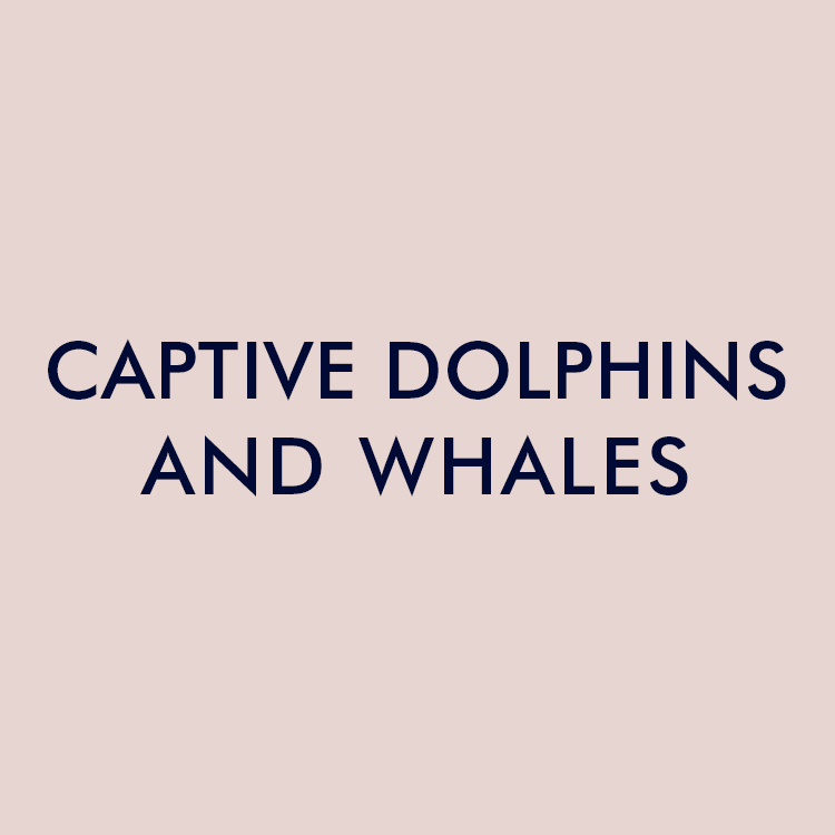 dolphins-whaltes.jpg