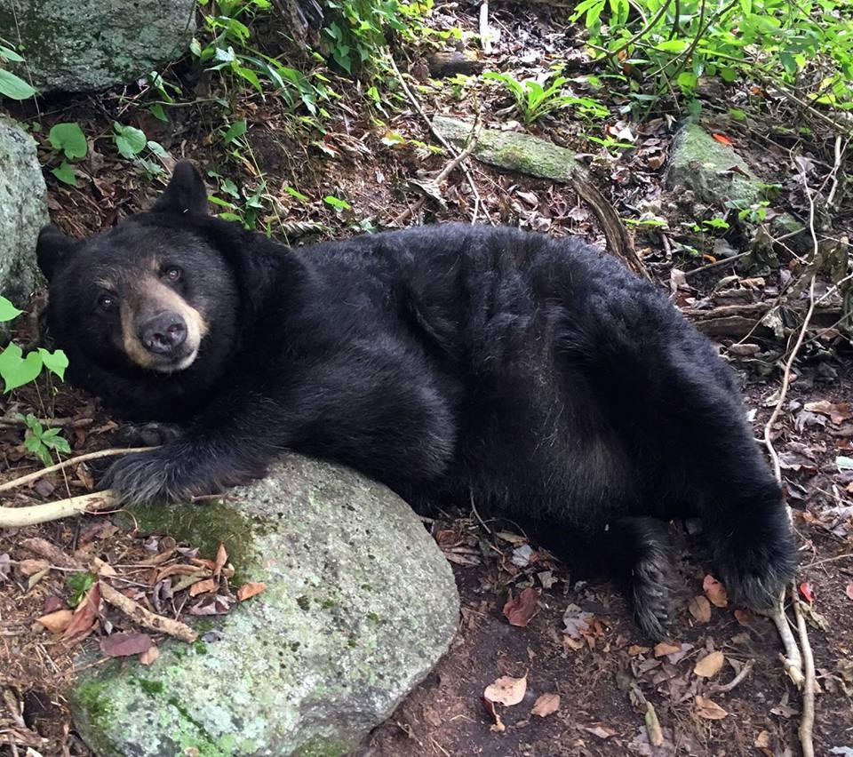Gerry the Black Bear - Deborah Anderson.jpg