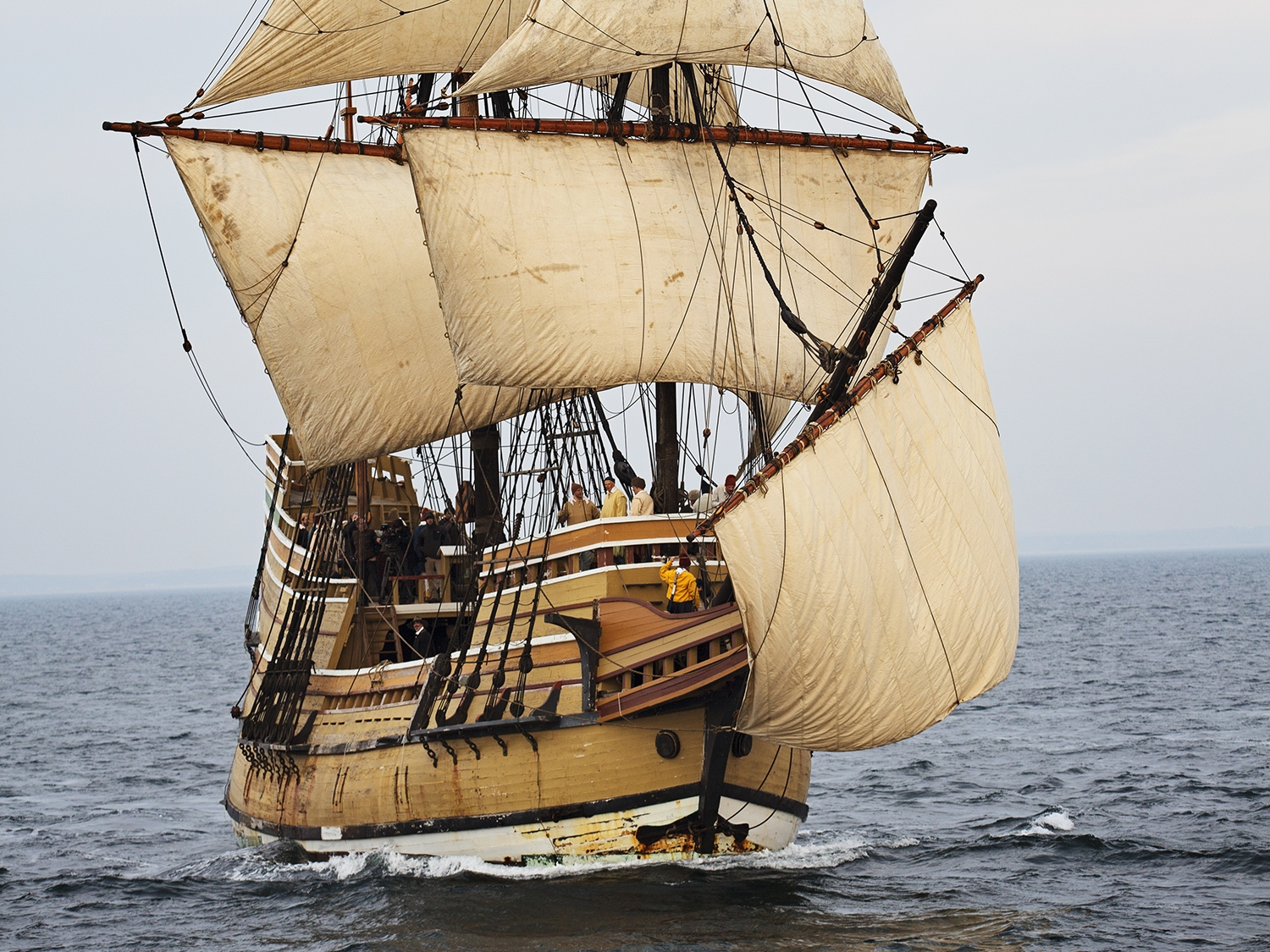 Mayflowerii_frontangle.jpg