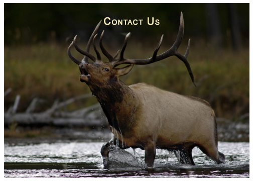 ELK-WB-Contact-Us.jpg