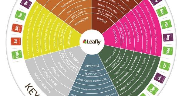 Leafly Terpene Info