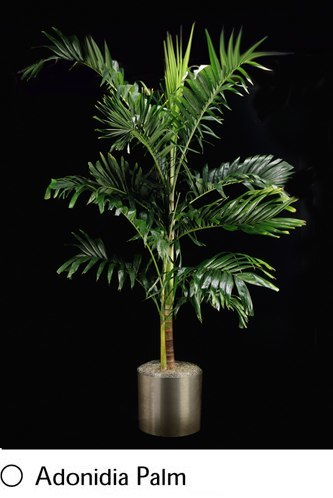 adonidia-palm.png