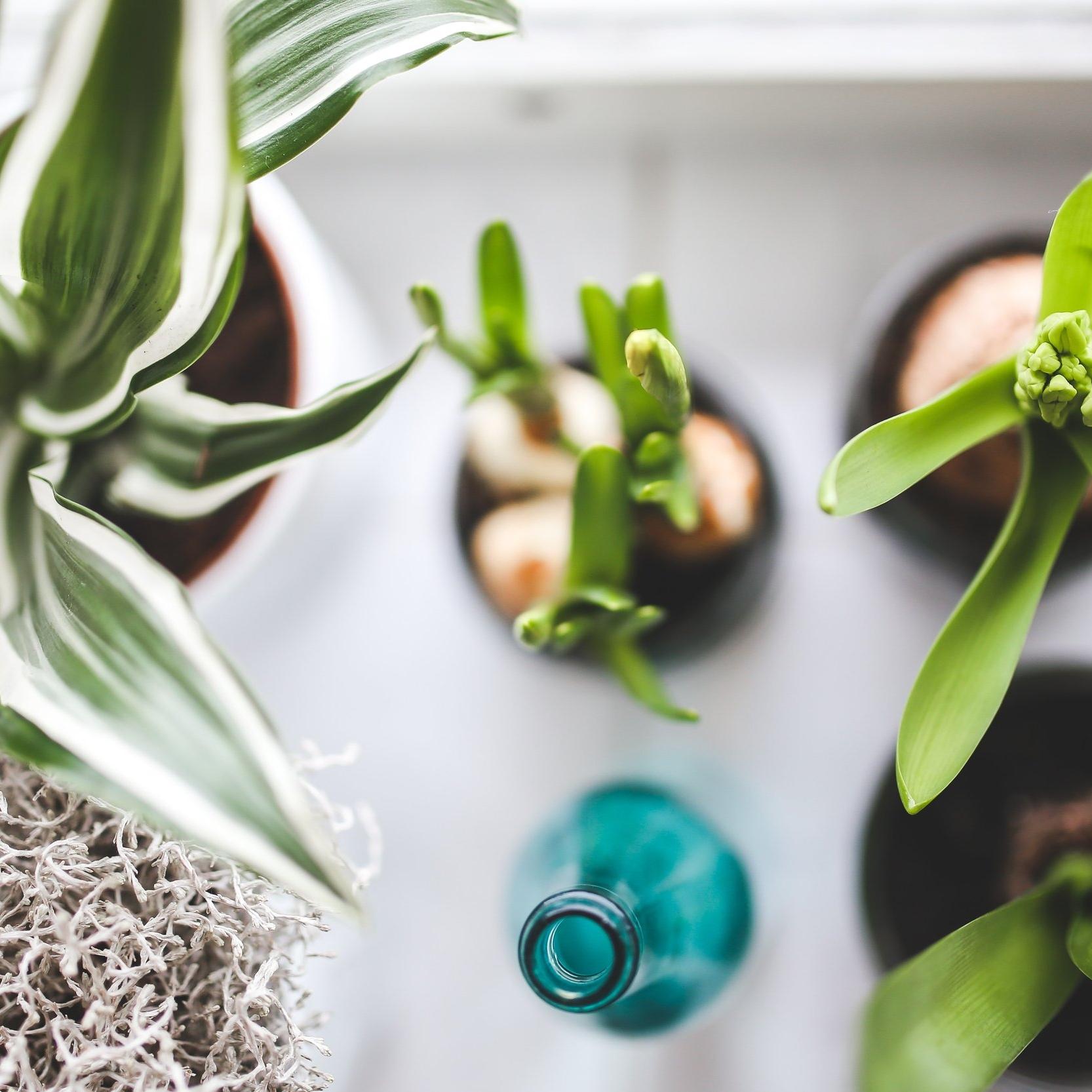 indoor-plants-overhead.jpg