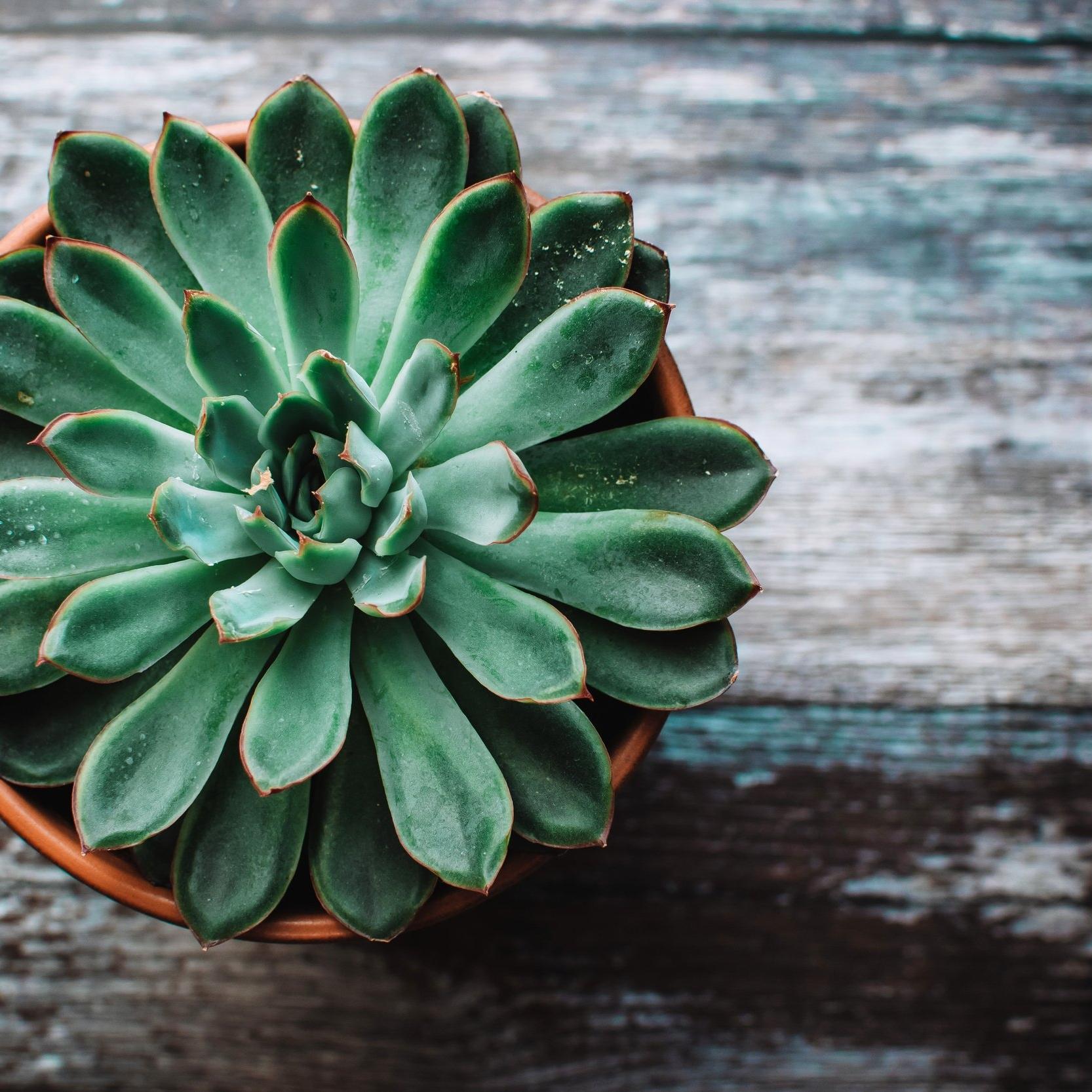 table-top-succulent-planter.jpg