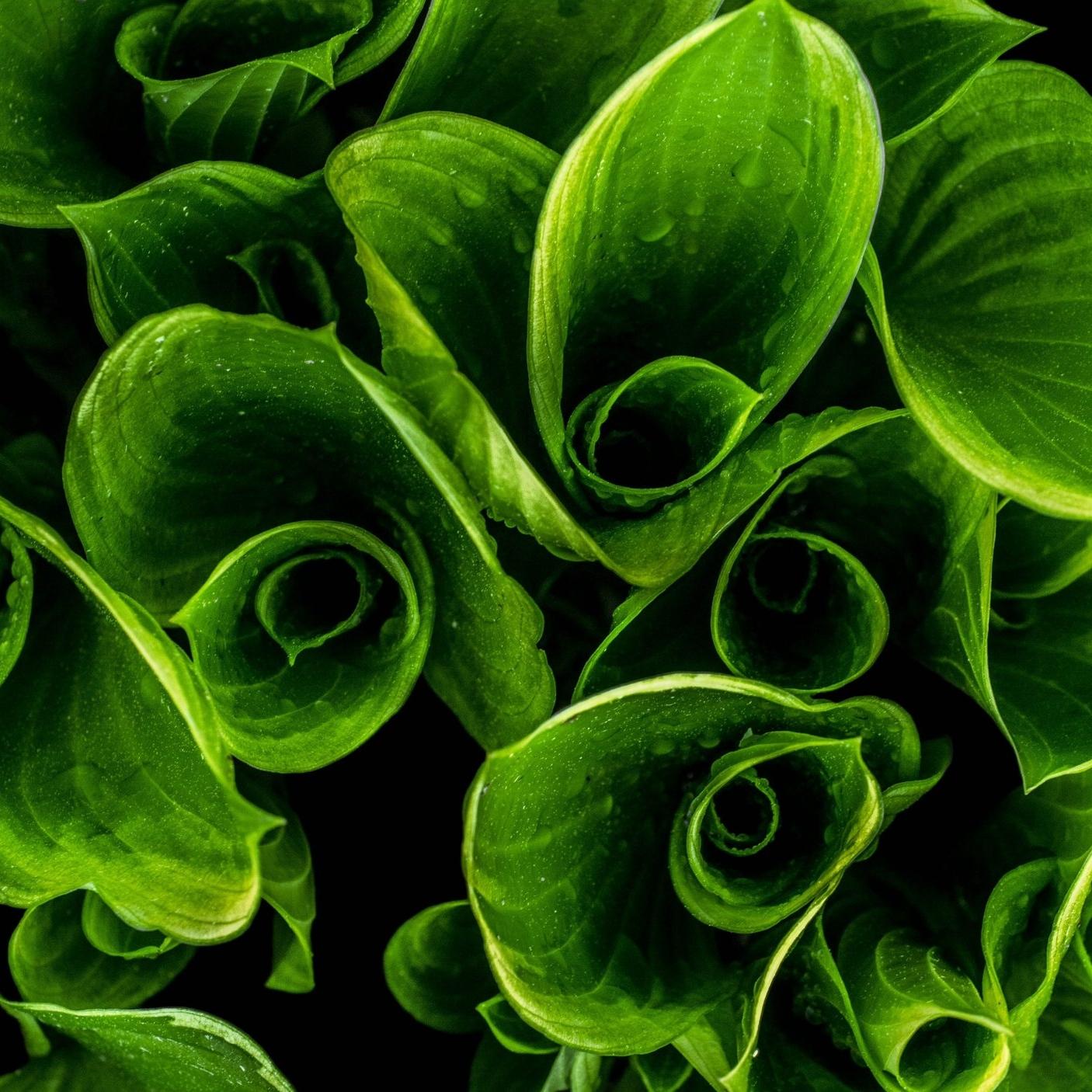 close-up-green-leaves-119591.jpg