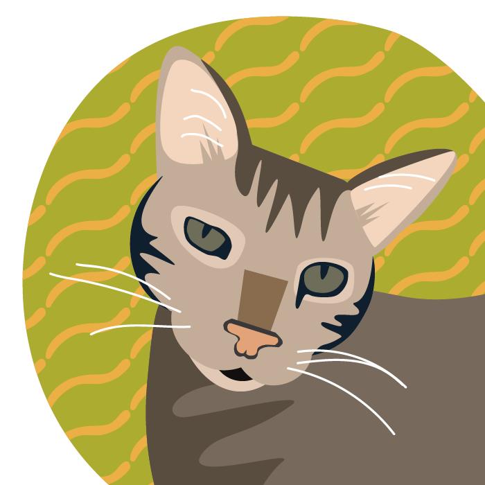 Silvio Cat.png